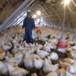 フリーターだけどハロワ行ったら鶏舎内作業スタッフ月給20~23万であったんだがどうなの?