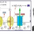 第78回ノーベル化学賞 ミッチェル「科学浸透理論による生体内エネルギー伝達の知見への貢献」