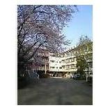 『桜はもう満開』の画像