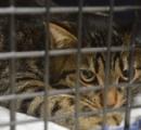 無料で猫の不妊・去勢手術をする動物病院 1年半で1万匹に施術