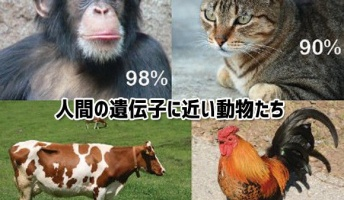 人間と遺伝子の構造が近い10のもの…猫はかなり人間に近かった!