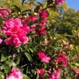 『【朝のご挨拶】彩湖・道満グリーンパークで開催された「プレーパーク」遊び。市民の8割が他所からの移住者という、戸田市ならではの結びつきが生まれています。』の画像