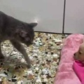 ネコが子犬に近づいて行く。新入りにどうするの? → 猫はこうした…