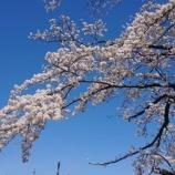 『お花見開催!』の画像