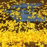 『2020年12月3日(木)に銀杏が色付いた関内駅周辺を歩いて来る、ほか』の画像