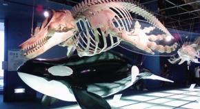 シャチとサメの骨格と比べたらサメが陰キャすぎるんだが