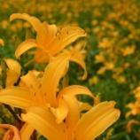 『六甲高山植物園へ』の画像