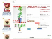 【乃木坂46】桜井玲香の観葉植物、引っ越し祝いにおすすめの品だった事が発覚wwwwww