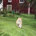 ネコがこっちに走ってきた。もふもふ、ピンっ♪ → 猫の気持ちはすぐに分かりました…
