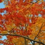 『赤川水源地 笹流ダムの紅葉』の画像