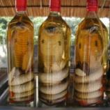 『コブラ酒の中のコブラに咬まれる』の画像
