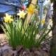 """来てます""""春""""が、、、"""