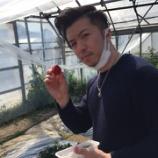 『イチゴ狩り♪』の画像