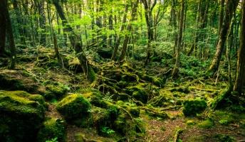 富士青木ヶ原樹海にまつわるヤバい話