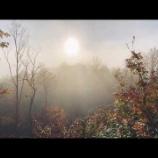 『朝霧の中で』の画像