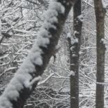 『淡雪の朝』の画像