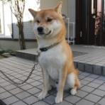 ぶろぐぱなぱな(verⅡ)