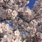 桜受験ブログ 偏差値40台から 国公立大学 現役合格へ