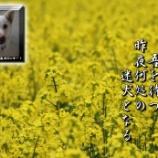 『迷犬よ何処に!』の画像