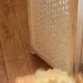 【ネコ】 天窓から太陽の光が注ぐ階段。ポカポカにゃ♪ → うちの猫はこうなります…