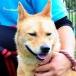 【社会】殺処分寸前の捨て犬から災害救助犬になった「夢之丞」、ネパールへ出動 人に捨てられた命が人のため駆け回る