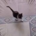 子ネコ部屋は今日も賑やかだった。逃げろー♪ まてまて~! → 見守る母猫と子猫たちはこんな感じ…