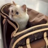 『年収4億円を稼ぐ猫』の画像