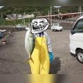 見老津沖でシマアジ・泳がせ釣り‼
