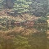 『明治神宮南池』の画像