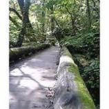 『木の橋を渡る』の画像