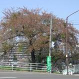 『わが家の桜10 16』の画像