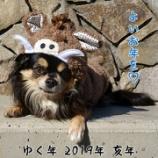『ドッグラン納め☆』の画像