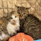 『【猫】うたくん・まおちゃん 家族が決まりました』の画像