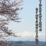 『郷桜』の画像