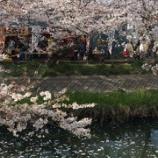 『船橋 桜の名所 海老川 本日の桜の状況』の画像