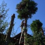 『杉の木伐採』の画像
