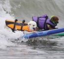 【画像】犬たちのサーフィン大会を開催-カリフォルニア