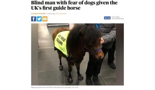 犬恐怖症の視覚障害者のために盲導犬ではなく「盲導馬」を導入、イギリス初