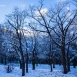 『まだまだ雪の中Still in the snow.』の画像