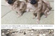 【動物】死んでしまったペットのクローン作ります 犬580万円、猫380万円 中国でクローンビジネスが人気