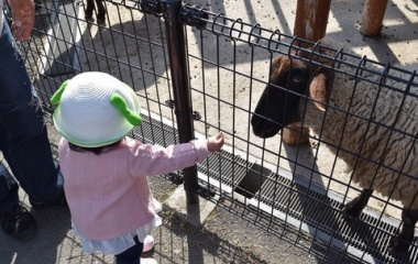 『今日は5人で東武動物公園に行ってきました!あーちゃんが餌をあげる!』の画像