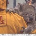 まるで地獄絵図!コアラ、ワラビーなど約5億匹も焼死?オーストラリア森林火災