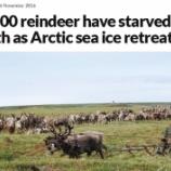 『北極圏の気温上昇で8万頭のトナカイが餓死』の画像