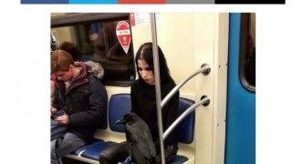 【ロシア】席取りのため? カラスと地下鉄に乗る女性に批判殺到[05/04]