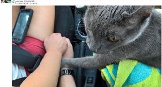 【猫】タヒを悟ったネコの切ない行動 飼い主の手を掴んでお別れの握手