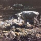 『世界最悪の牧場から生還したクレオ』の画像