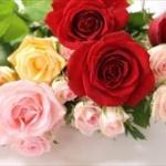 【画像】ロンブー田村亮さん、闇営業で振り込め詐欺最優秀者に花束を贈呈していた