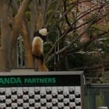 『上野動物園で娘と花見デートしてきた。』の画像