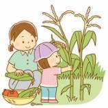 『【クリップアート】とうもろこしを収穫する子どものイラスト』の画像