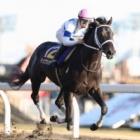 『【川崎記念】チュウワウィザードが断然人気に応え6馬身差圧勝!』の画像